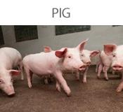 PIG-BT