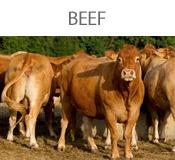 beef-bt