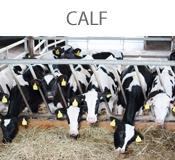 calf-bt